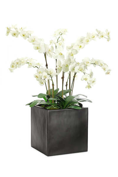 Orchid Flowers With a Cube
