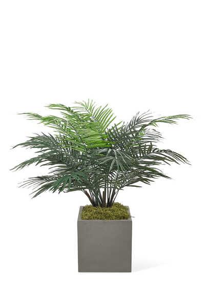 Palm Areca WIth Concrete Cube