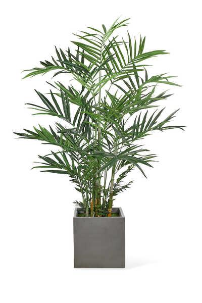 Kentia Palm With Concrete Cube